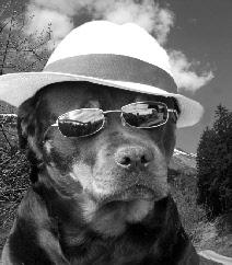 huisdieren verzekering